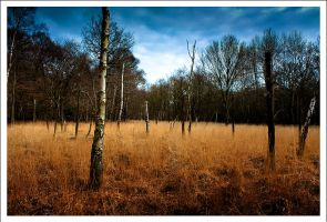 Forest and Grass II by neoweb