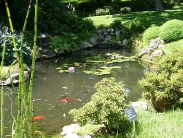 Japanese Pond by great-queen-morrigan