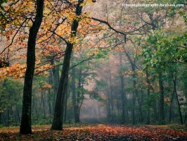 autumn dreams by wroquephotography