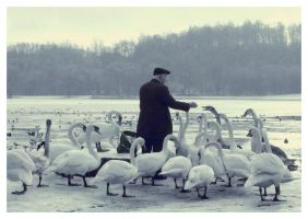 One Man and his Swan by idlekids