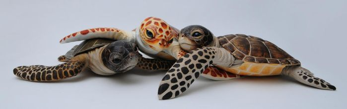 Poseable art doll, baby sea turtle by FellKunst