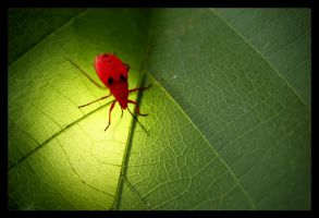 Red Bug by AbhaySingh1
