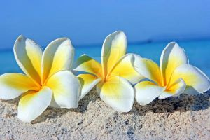 Three tropical flowers by siart2006