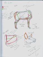 Elk Anatomy Studies by GunChica