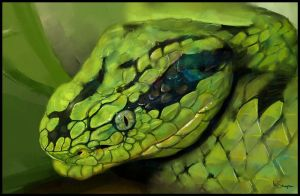 study snake by Marcsampson