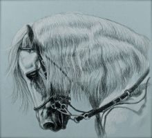 Horse study 3 by mfreed