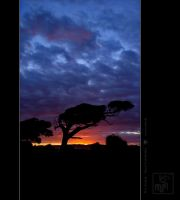 New Zealand- Sunset Canibalbay by thecolos