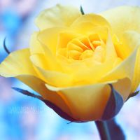 yellow by illusionality