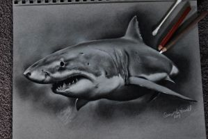 Great White Shark by sjhowell11