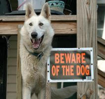 Beware of the dog by tain8