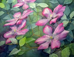 Clematis by Shelter85