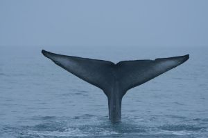 Whale Tail 8881261 by StockProject1