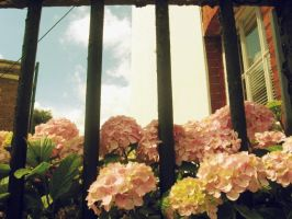 Pink flowers in England by thorneater