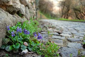 Stop and smell the violets by Adsarta