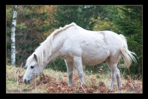 White Horse 3 by Globaludodesign