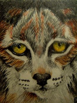 ACEO - Cat by Edward-Raphael