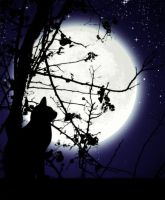 The Cat and the Moon by hiddenmuse