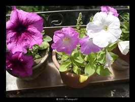 My Flowers by Photoguy09