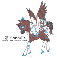 Foal: Solas x Drucht by Dragonheart-Stables