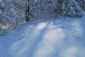 Snow Shadows by calger459