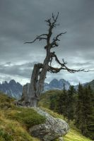 Dead tree 2 by Springstein