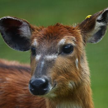 Deer by JStockPhotography