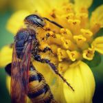 Busy Bee by Alex3636