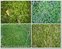 Moss Textures - Stock by BaB-Jane