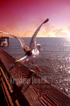 seagull sunset2 by RiotLife