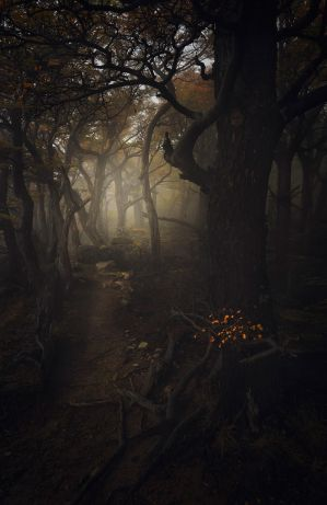 Enter | Forest of Souls by alexandre-deschaumes