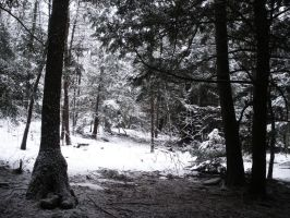winter5170 by shannon2693
