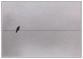 Bird On A Wire by green-sphinx