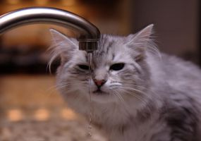 Kitten and Faucet no. 7 by Mischi3vo