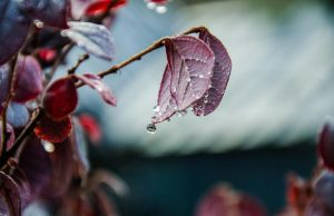 Dawn Droplets by PS-XiaoFeng