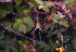 Yellow Spider by Carlosf93