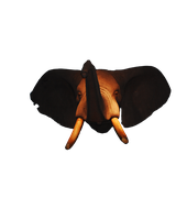 Elephant Head png file by MLeighS