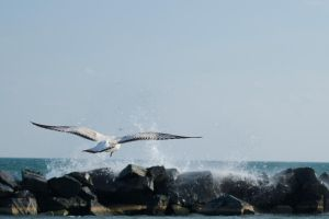 Flying Away by knilch