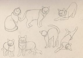 Cat Study by carrie-warwick