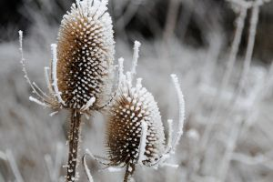A Cold Teasle by Ellie-S