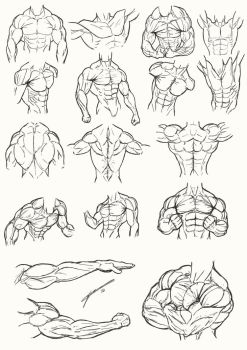 Male Torso Anatomy 2012 by Juggertha