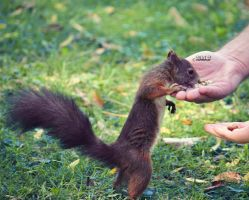 thx for the nuts, human! by nari-me