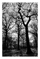 We Be Trees 2 by neoweb
