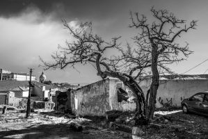 The Witch-tree of Lisbon by attomanen