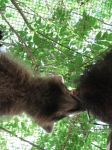 The Raccoon That Ate DeKalb County 10 by Windthin