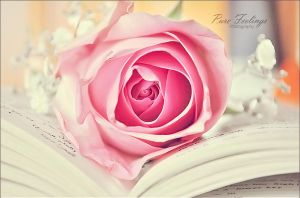 Rose in pastel .. New Look by pure-feelings