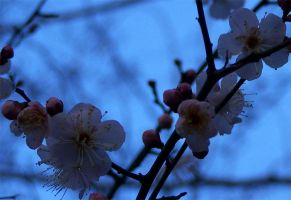 Spring has come - closeup by Qitian