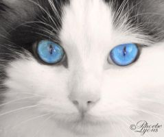 Mickey Blue Eyes by PhoebeLyons