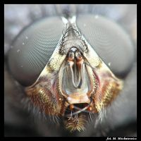 fly in macro by mmichniewicz