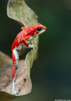 The Athlete by erezmarom