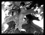 A Leaf in the Morning by hoopspro321